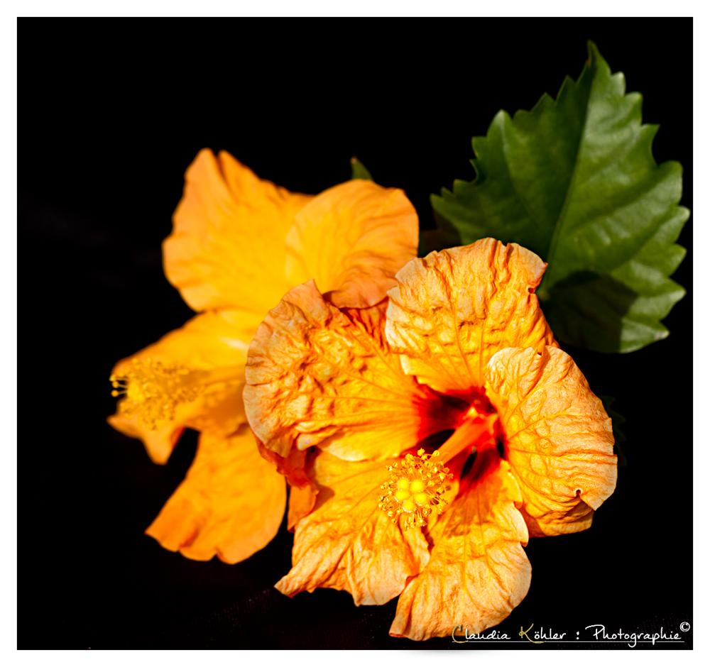 Blüten in Farbe