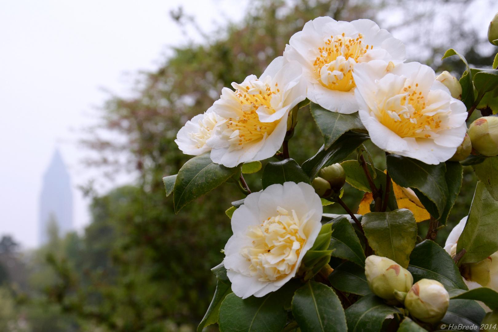 Blüten in Frankfurt am Main
