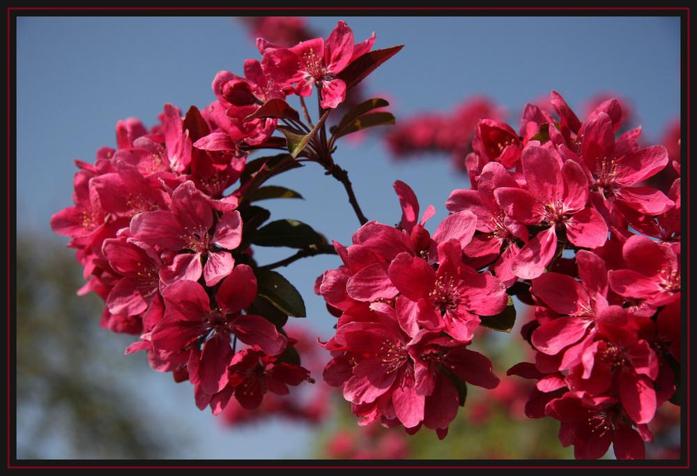 Blüten in rot