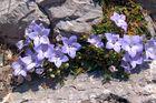 Blüten in Zartlila