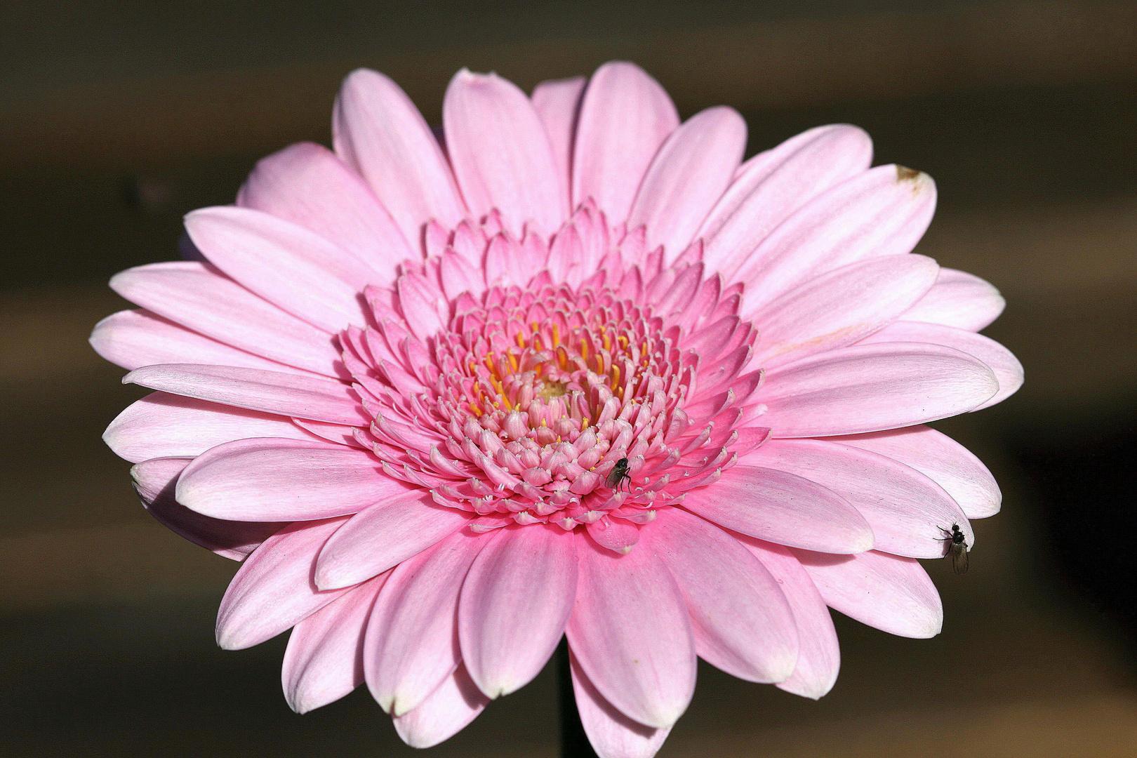 Blüten j