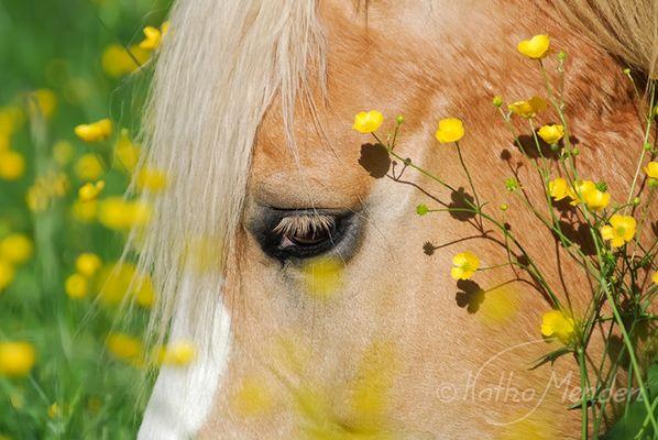 Blüten-Kopfschmuck
