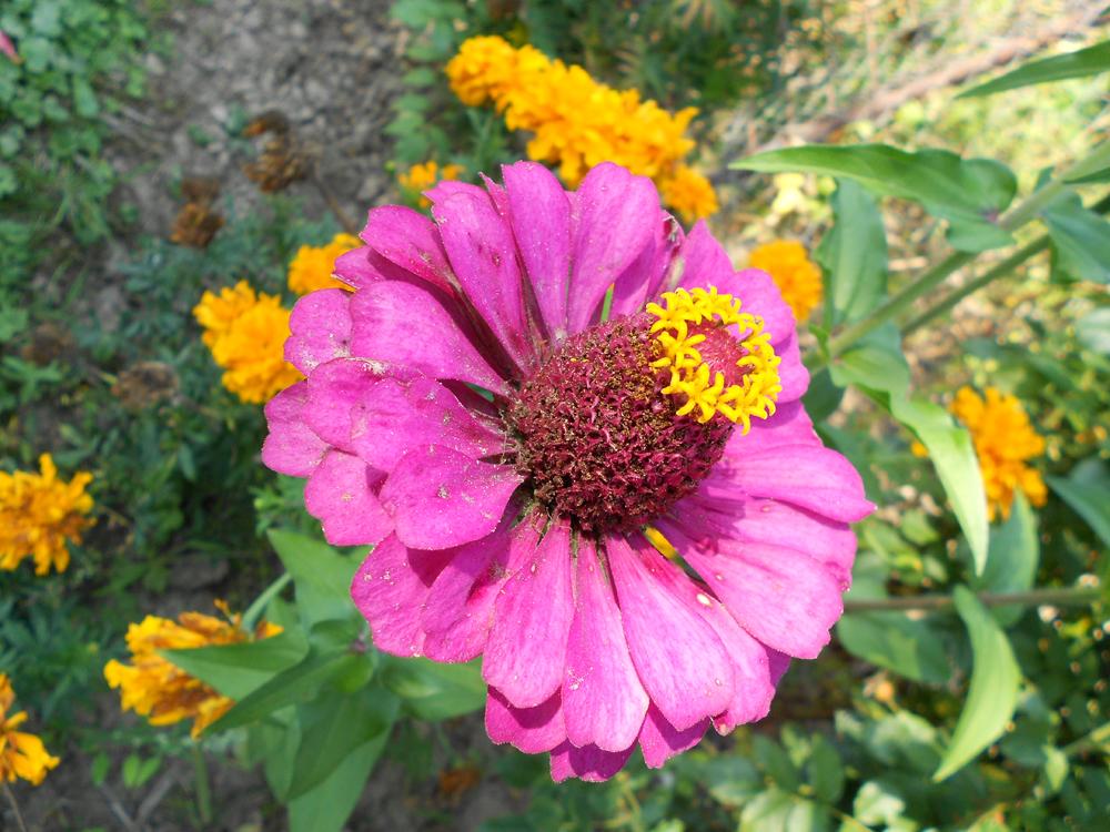 Blüten Krone