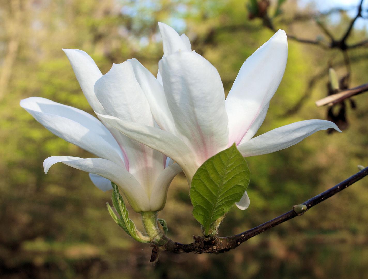 Blüten machen Freude....