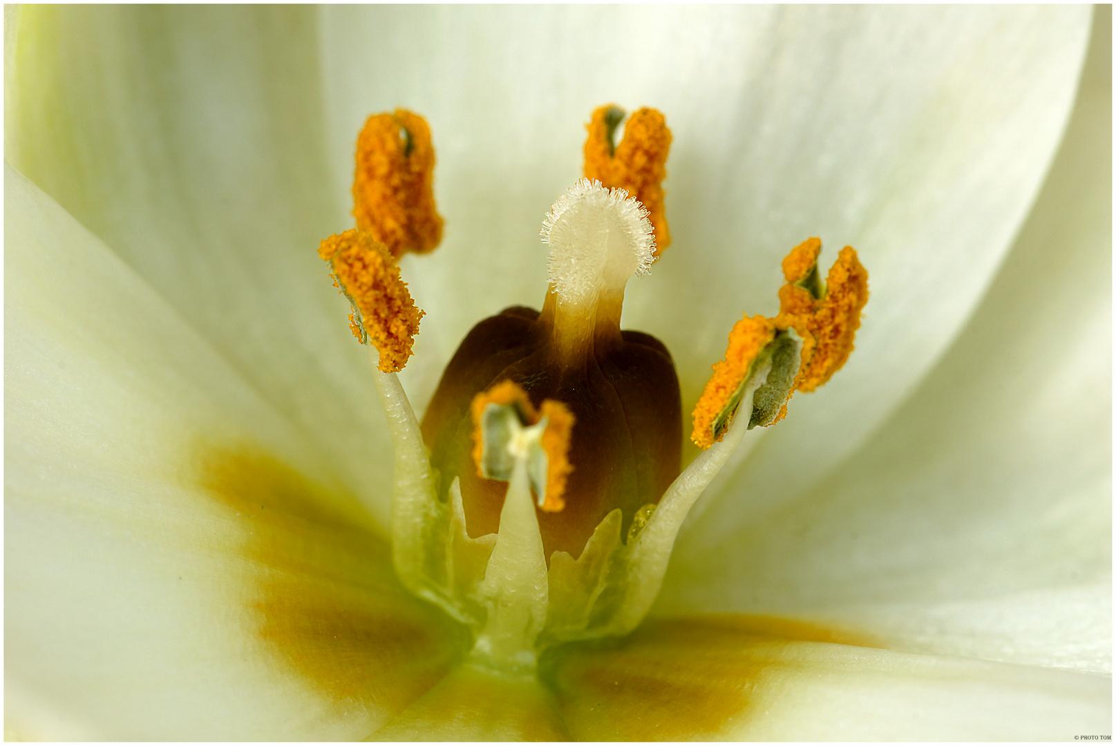 Blüten Makro