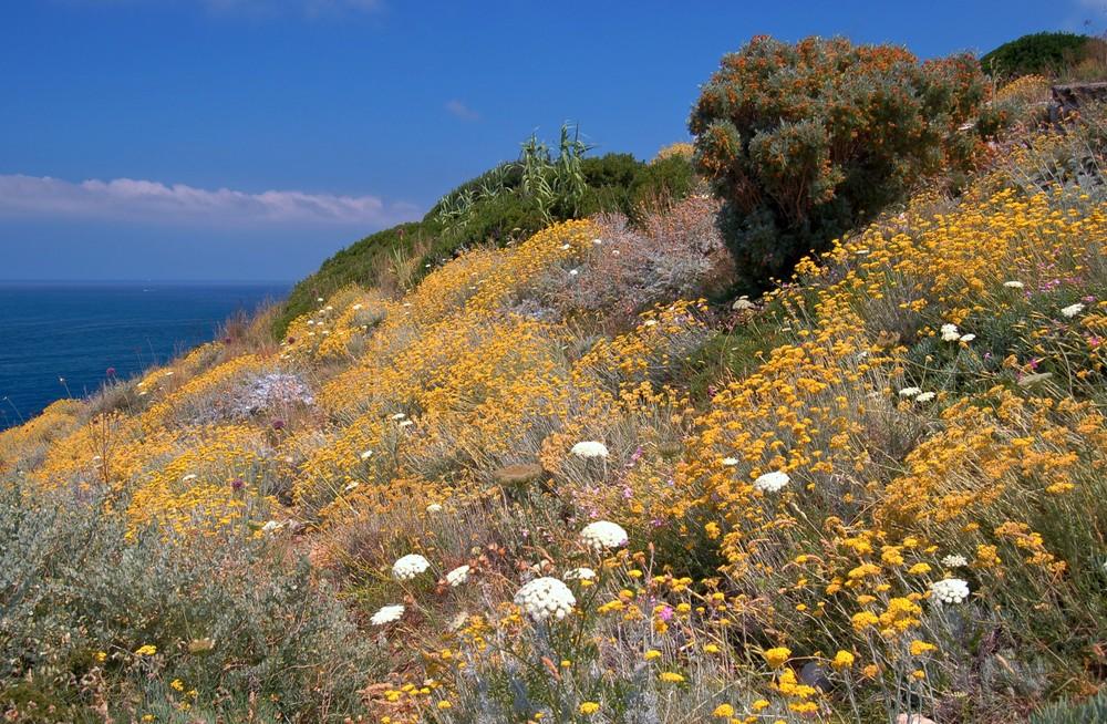 Blüten - Meer