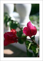 Blüten mit Kontext
