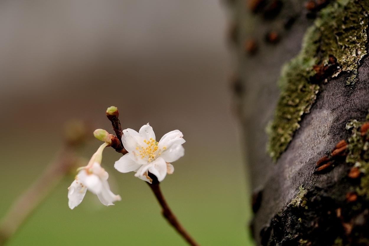 Blüten mitten im Winter