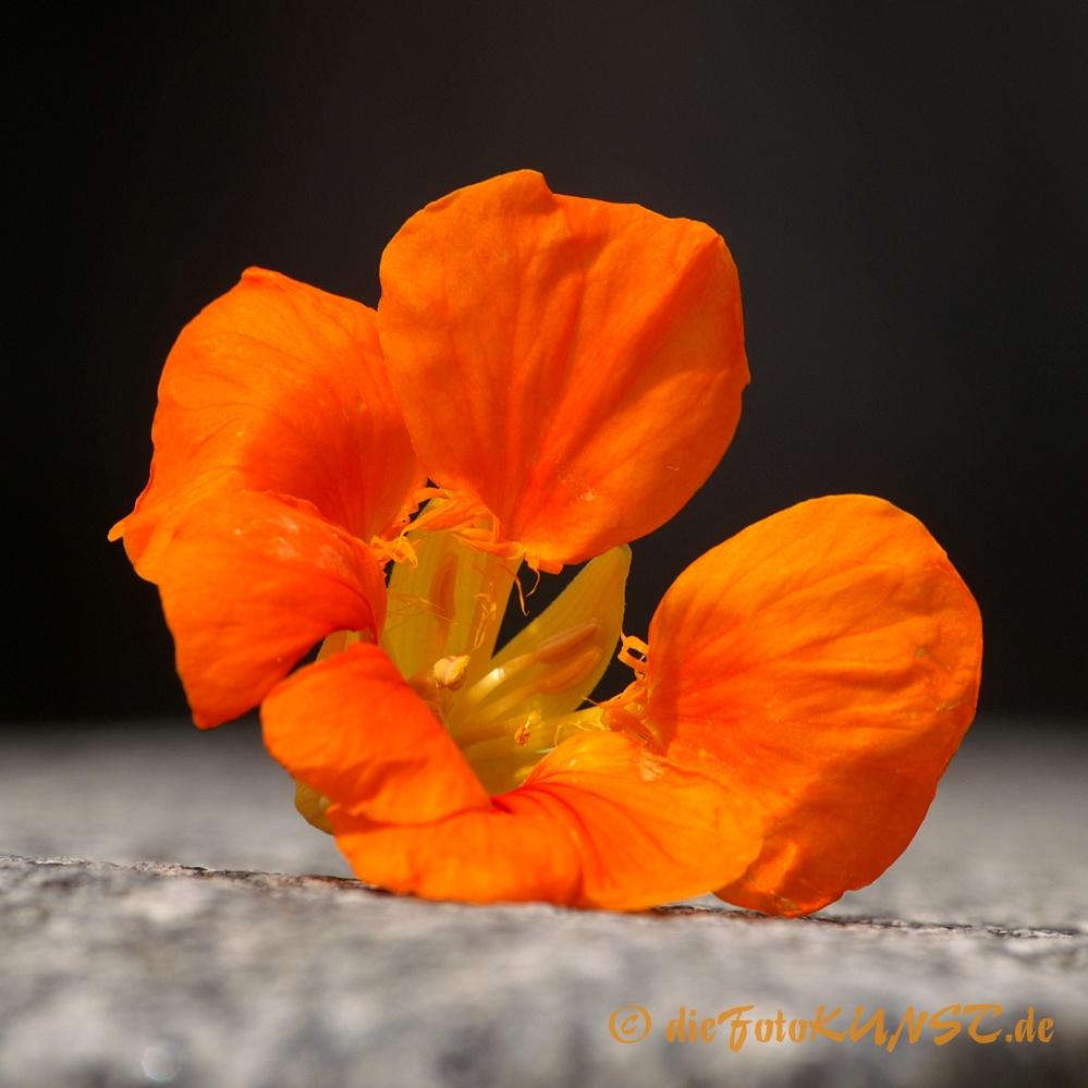 Blüten-Raum
