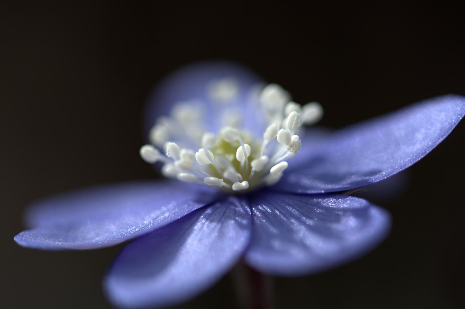 Blüten-Tanz