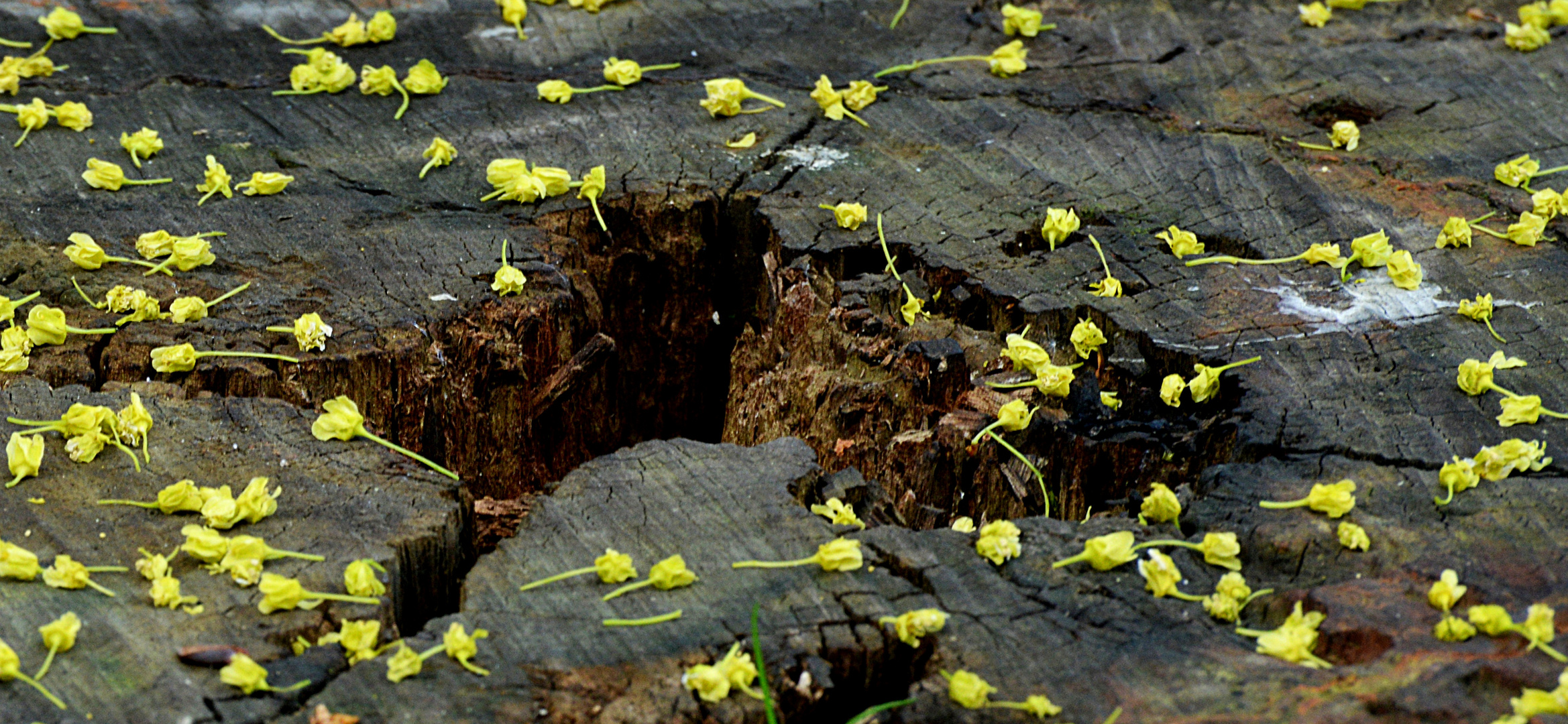 Blüten-Teppich auf dem Weg ins Nirwana