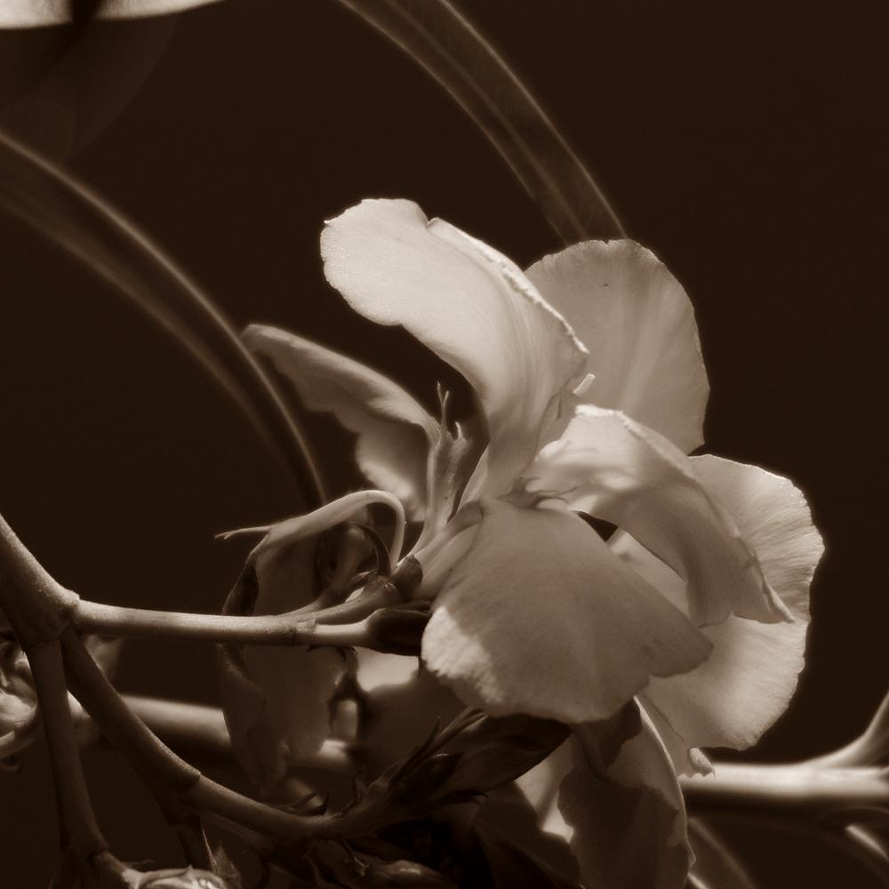 Blüten - Traum