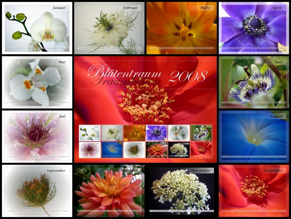 Blüten-Traum-Blüten 2008