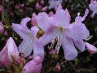 Blüten-Traum in zartem Pink