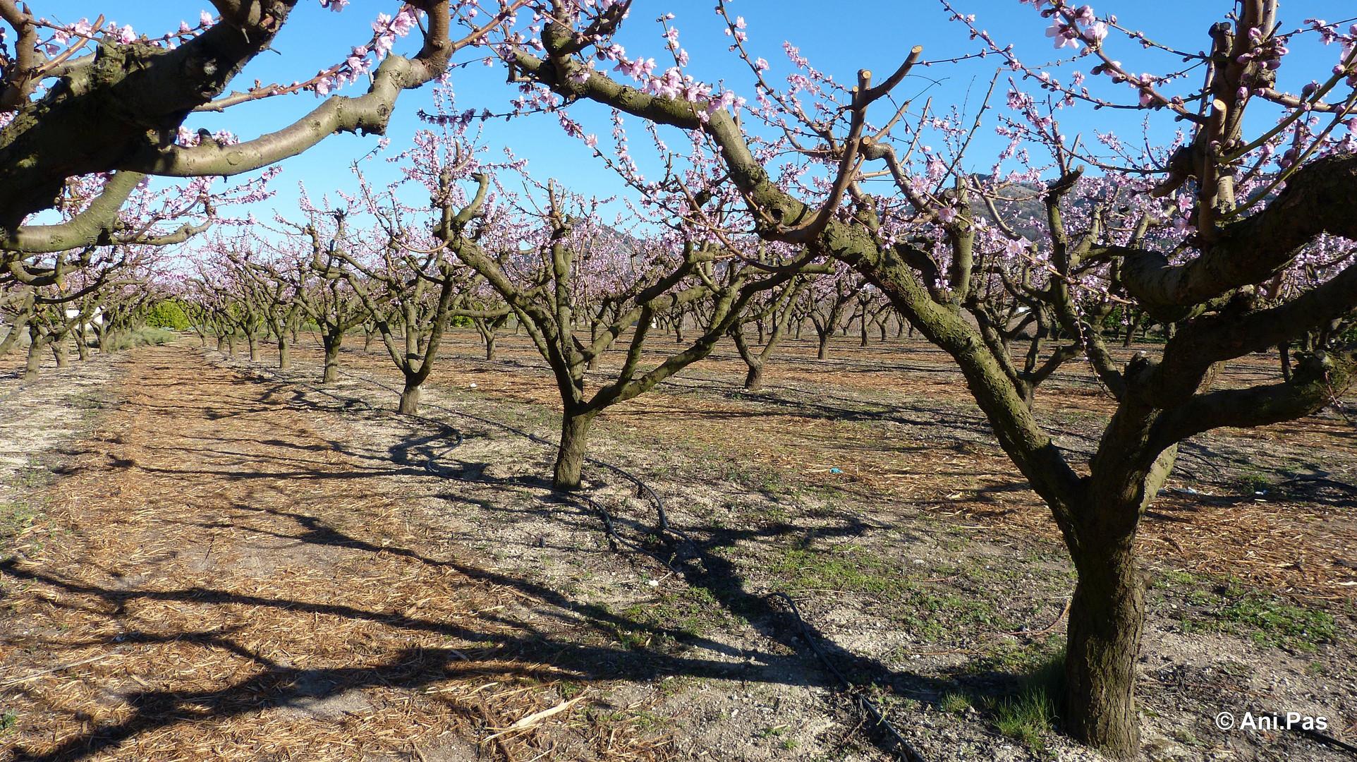 Blüten- (Traum) Landschaft II