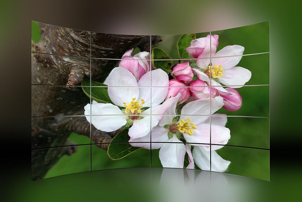 *Blüten-Trio*