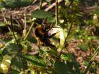 Blüten und Bienen 008