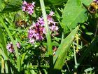 Blüten und Bienen 009