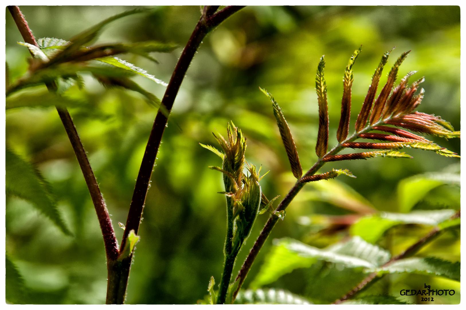 Blüten und Blätter im April