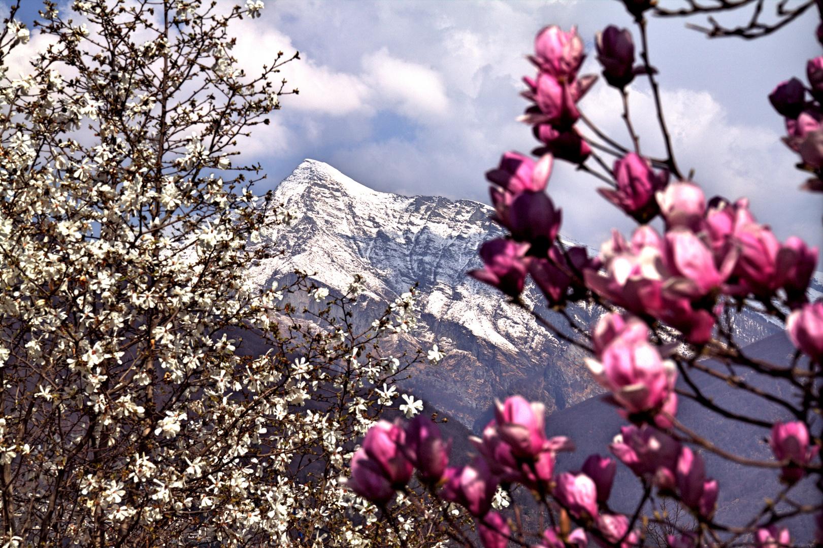 Blüten und Schnee