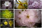 Blüten vom 13.April 2010