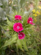 Blüten von der Billigknipse