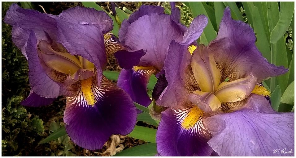 Blüten von ihrer schönsten Seite ,