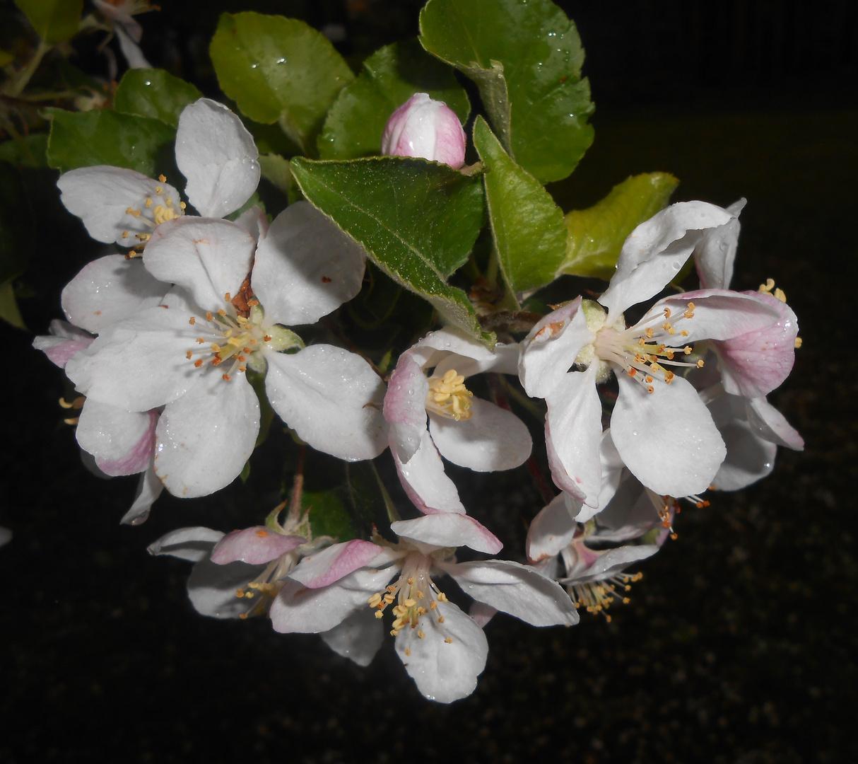 """Blüten- Zeit"""