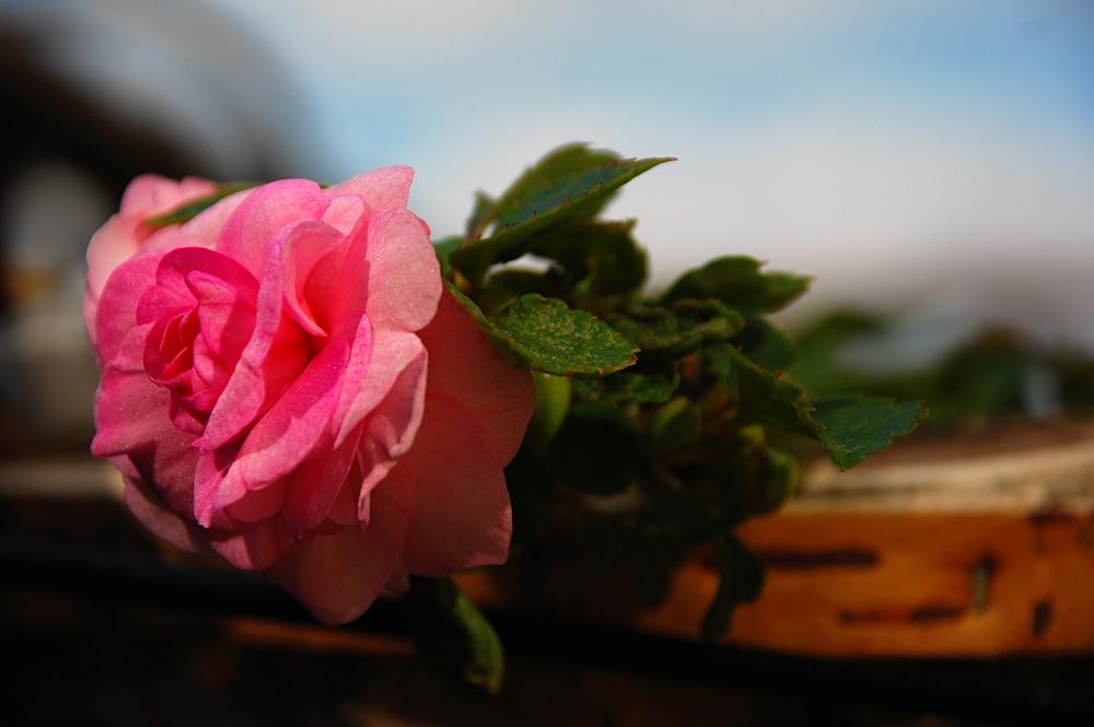 Blüten_2012_21