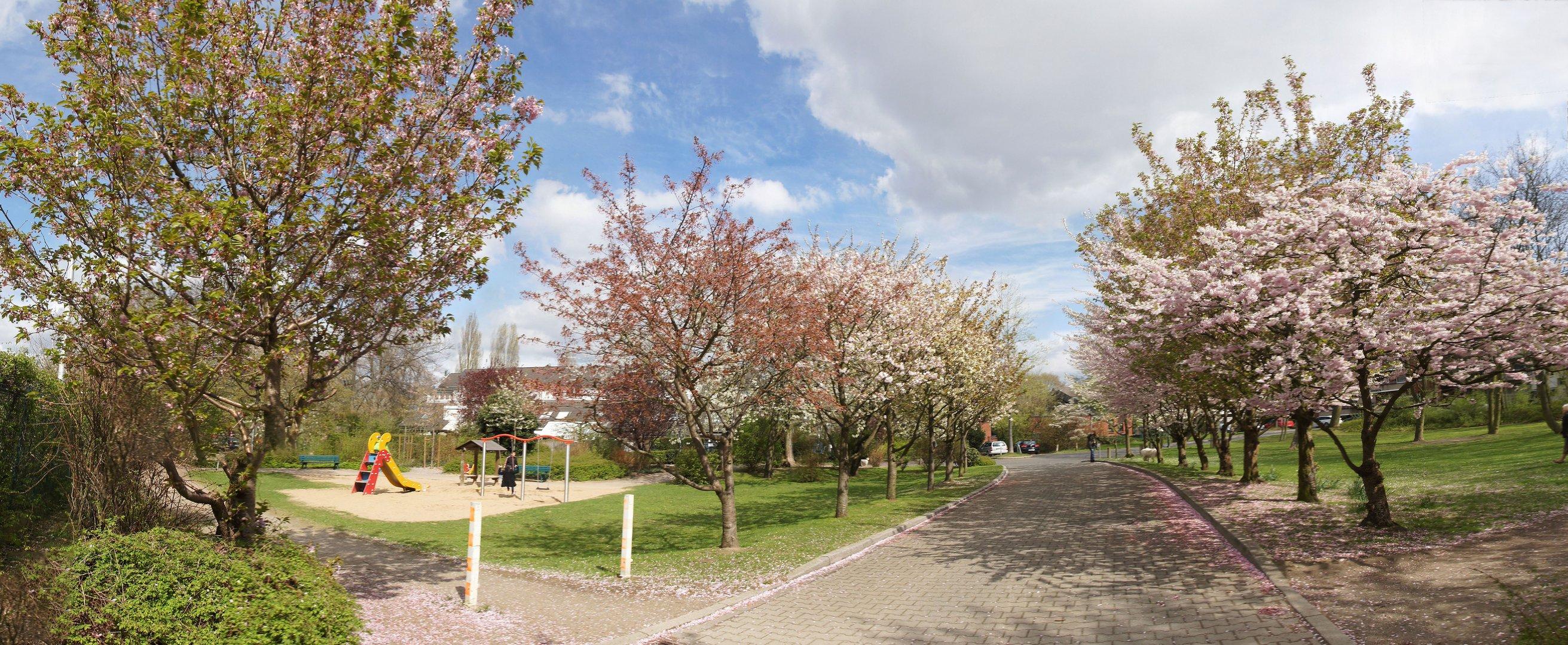 Blütenallee