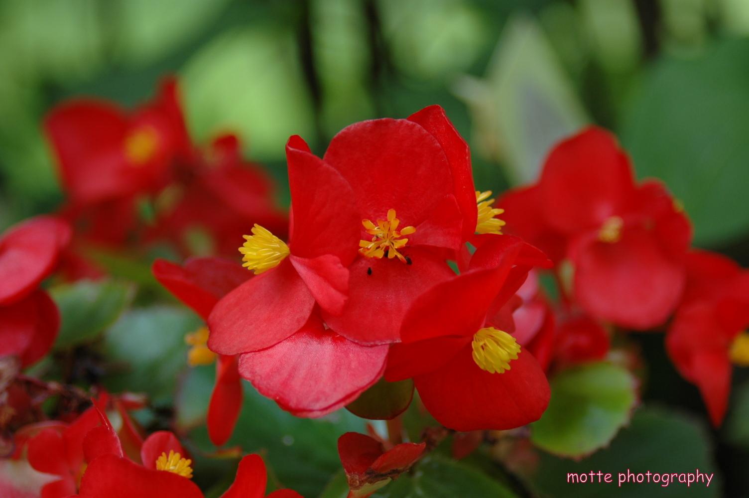 Blütenameise.