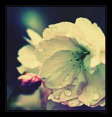 BlütenArt