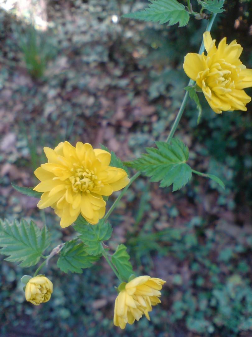 Blütenast