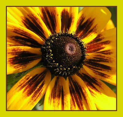 Blütenausschnitt
