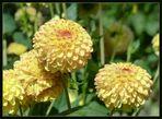 Blütenbälle