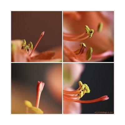 Blütenballett oder einer tanzt immer aus der Reihe...