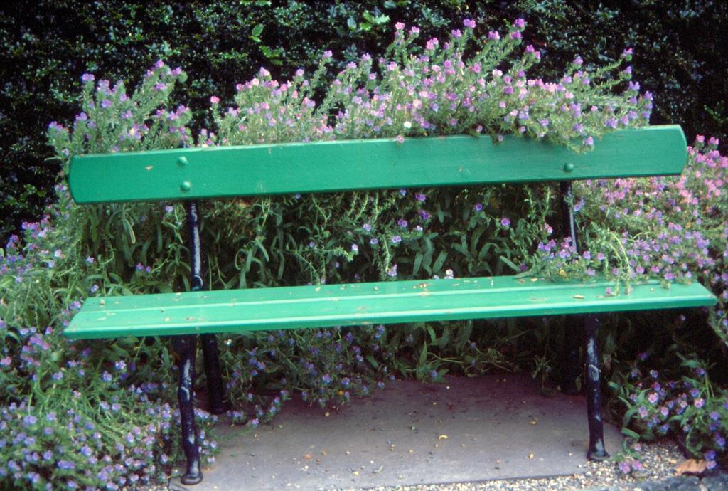 Blütenbank