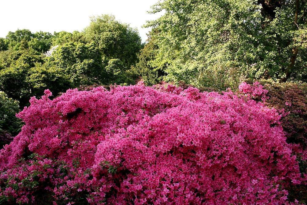 Blütenberge