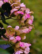 Blütenbilder