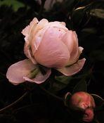 Blütenbilder 48