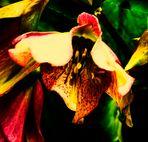 Blütenbilder und die Kraft der Farbe 2