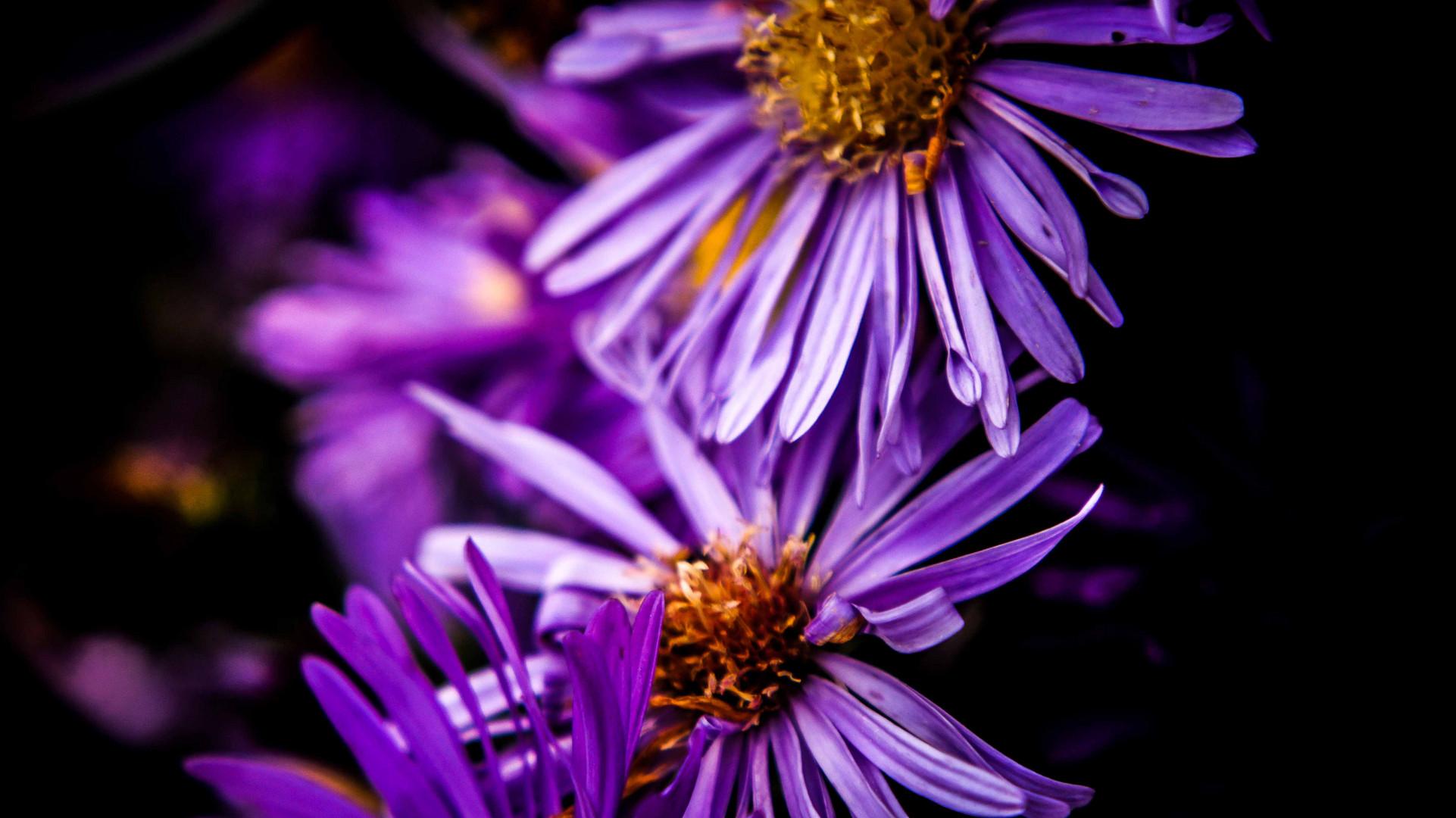 Blütenblätter im Großformat