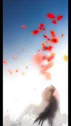 Blütenblätter im Wind