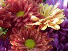 Blütenblätter mit Regentropfen