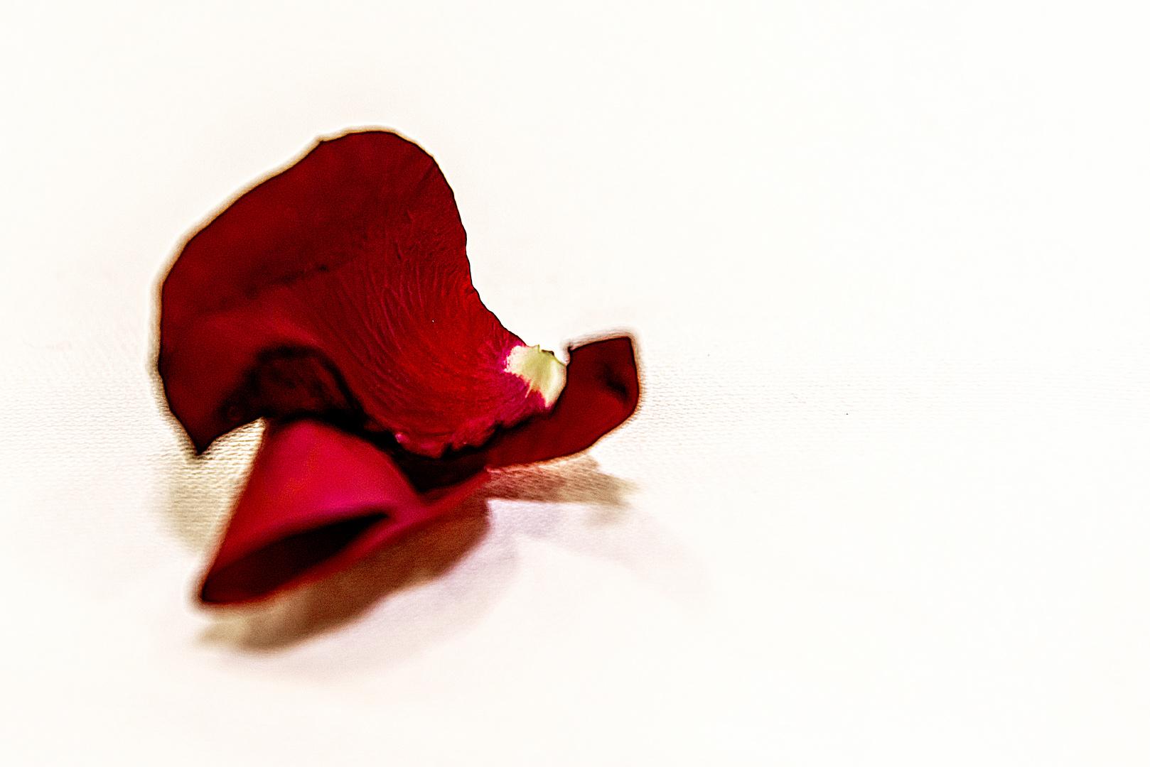 Blütenblatt 1