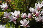Blütenbogen