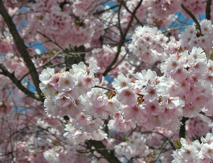 Blütenbracht I