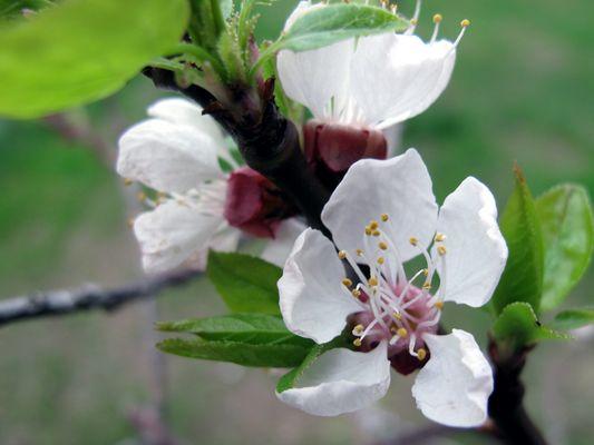 Blütenbracht III