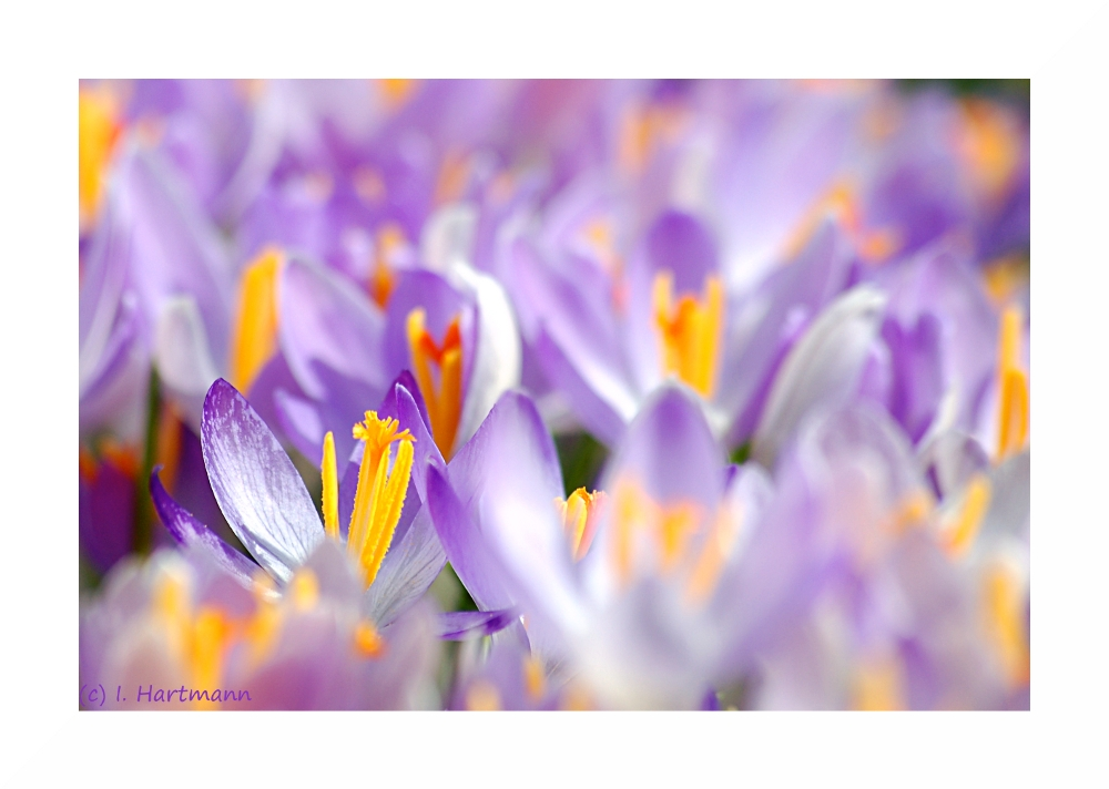 Blütenchaos
