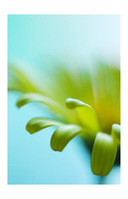 Blütendetail mal anders